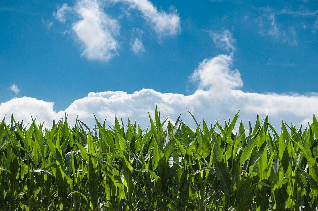 迫りくる生産緑地の2022年問題について不動産はどうなるのか?